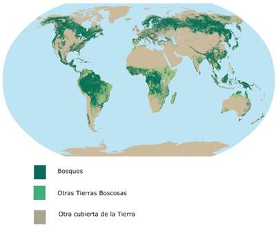 D nde est n los bosques ecobosques for Plano de un vivero forestal